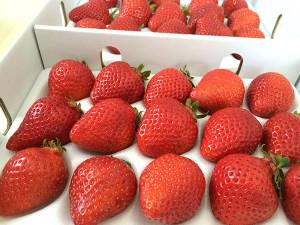 イチゴ「博多あまおう」が福岡県八女市から届きました