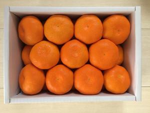 「Premium GENKAI」で「みかん」が届きました(佐賀県東松浦郡玄海町)